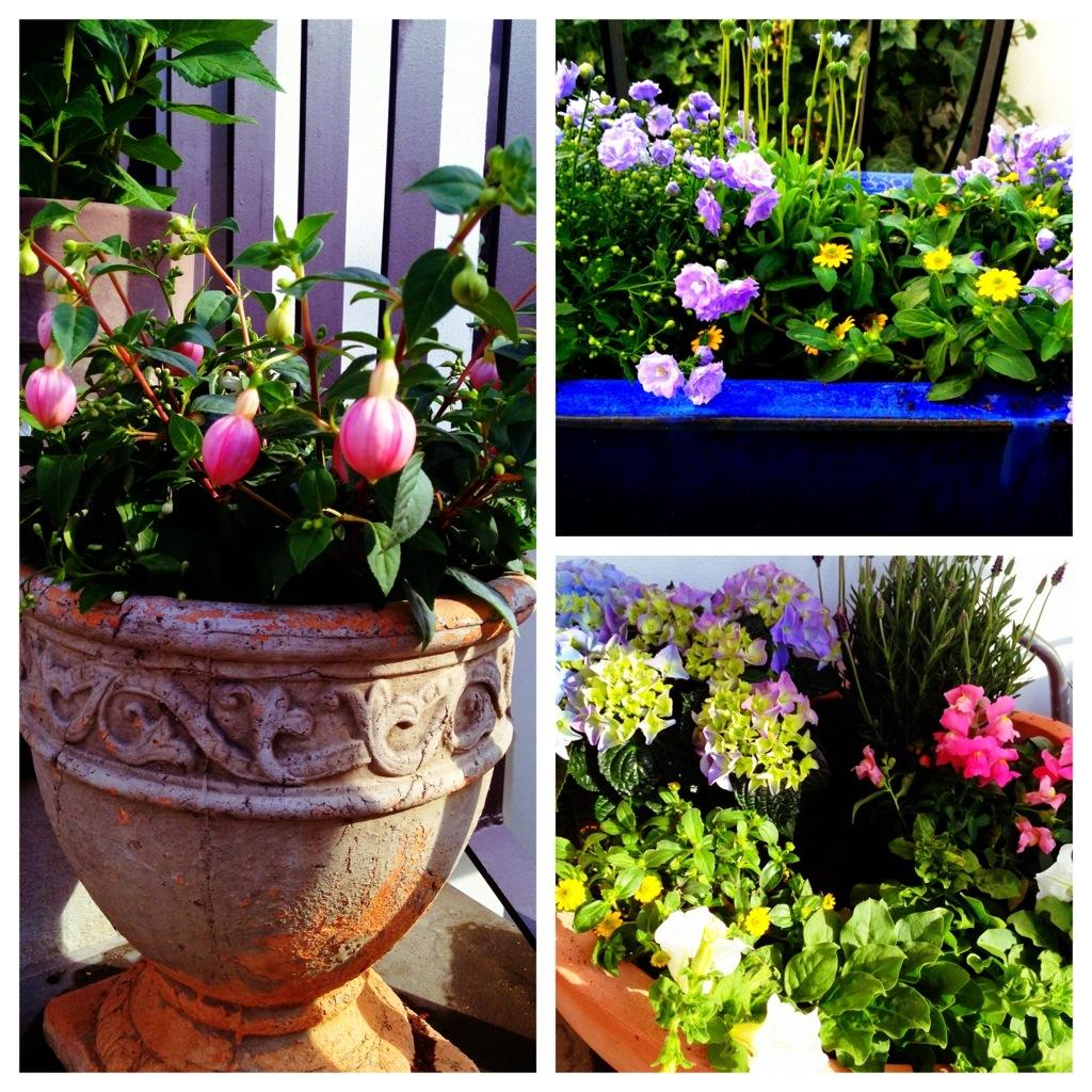 Pflanzgefäße mit verschiedenen Sommerblumen
