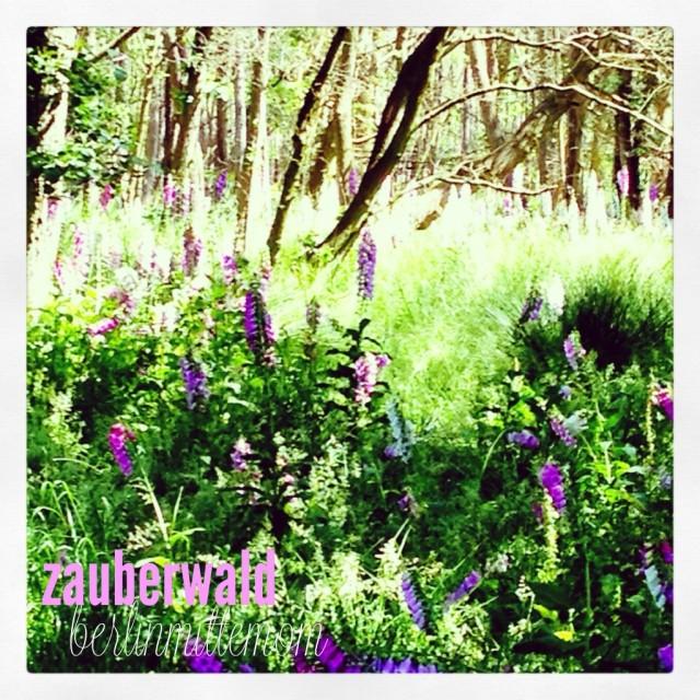 Nahaufnahmen von wilden Lupinen im Darßer Urwald