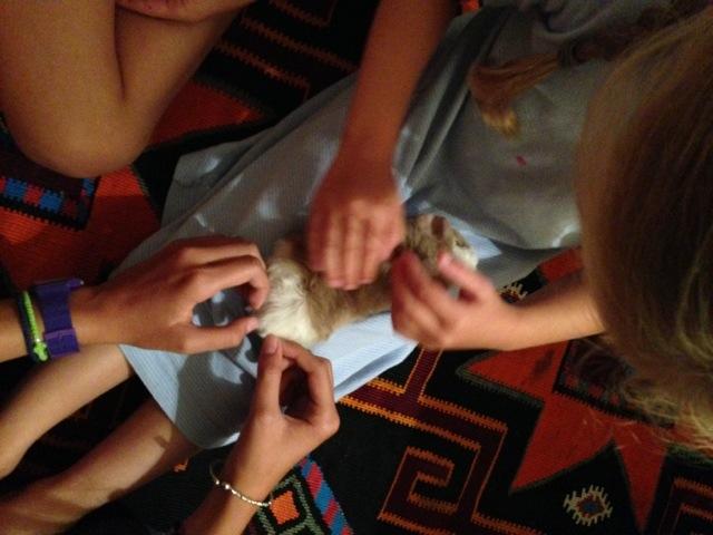Meerschweinchen und Kinder - 12 von 12 im August
