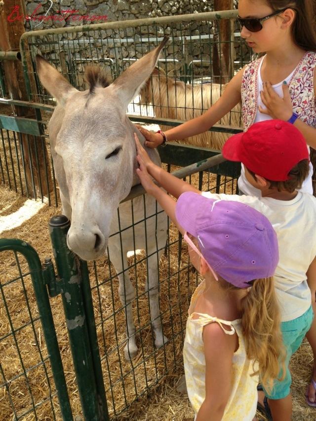 Ein Yael, Ein Ya'al, Esel, Donkey, Tiere, Living Museum, Jerusalem mit Kindern