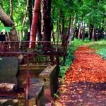 streifzug mit goldkind ::: ein friedhof, hagebutten & das leben nach dem tod