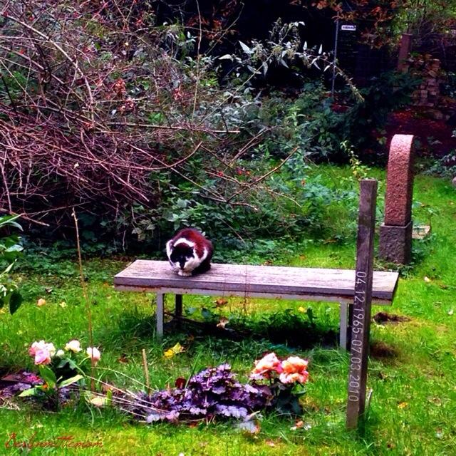 Streifzug, Friedhof, Herbstspaziergang, Herbst, Farben, Katze,