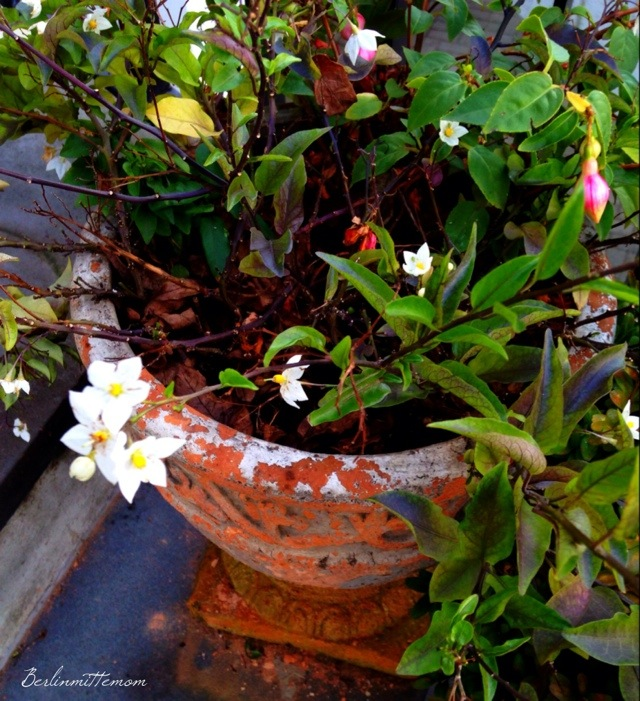 12 von 12, Blumen