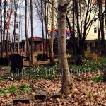 12 von 12, 12 Fotos am 12. Januar, Spaziergang zum Lieblingsfriedhof