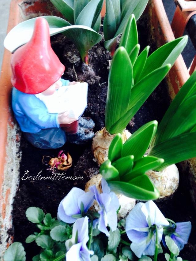 12 von 12, Bloggeraktion, Frühblüher, Gartenzwerg