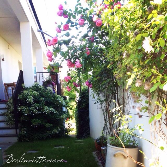 Wochenende in Bildern, pic of the day, Foto des Tages, urban garden, Stadtgartenm, Rosen