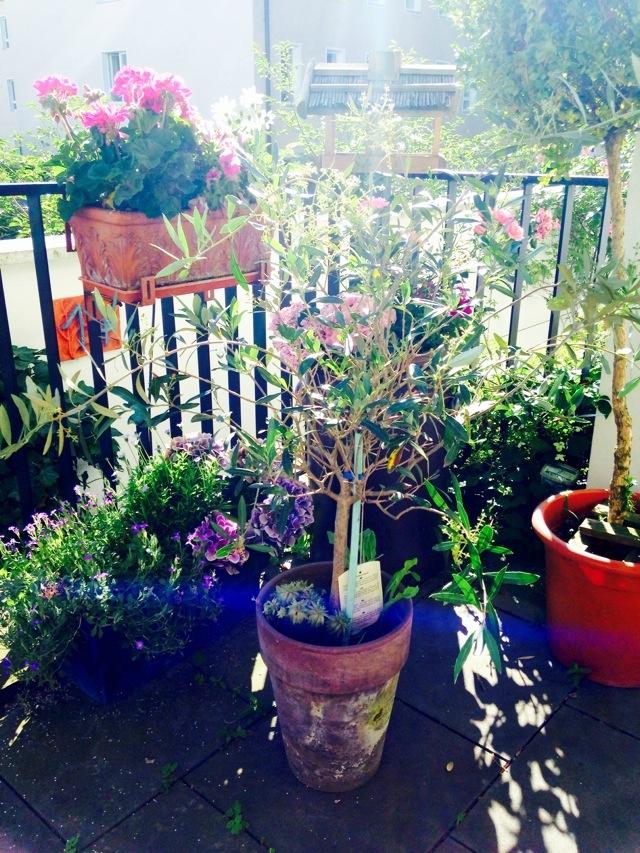 12 von 12 im Juni, 12v12, container garden, Gartenbild
