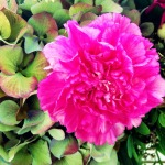 abschied von einem blumenmädchen ::: #flowersforinga