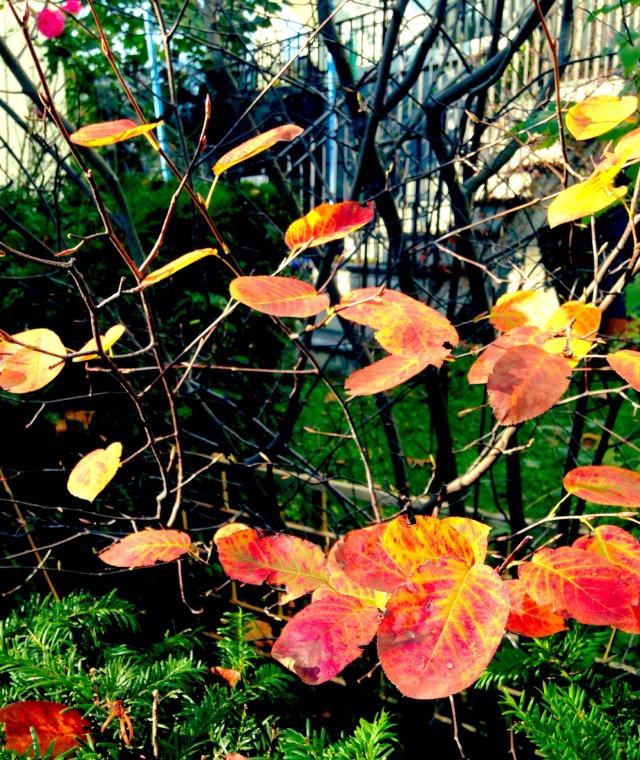 Heimwehwetter, Sehnsucht, Oktober, Herbst, Wetter, Kindheit
