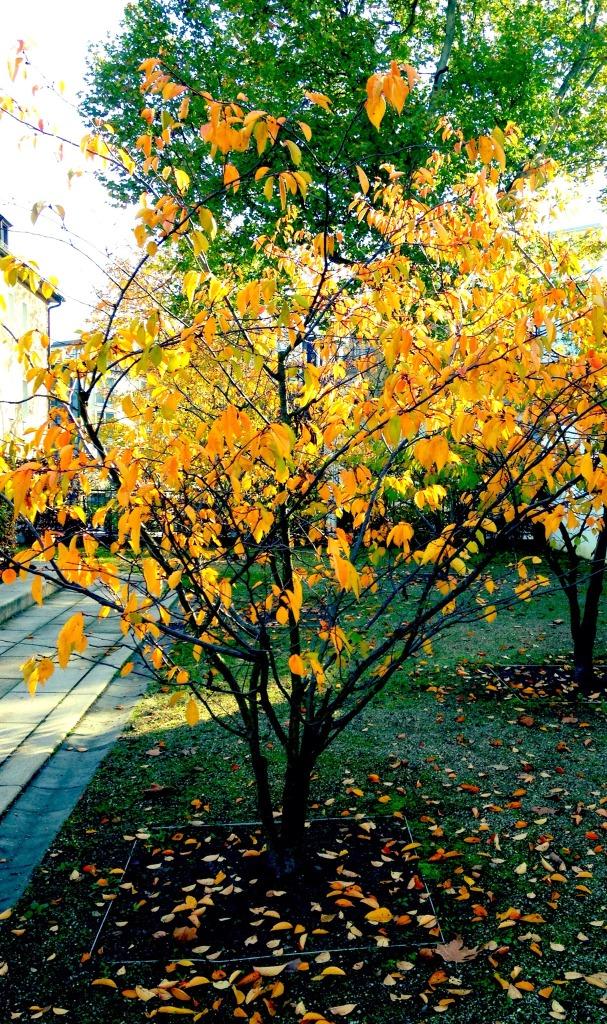 Herbst, Heimweh, Sehnsucht, Heimwehwetter, Wetter