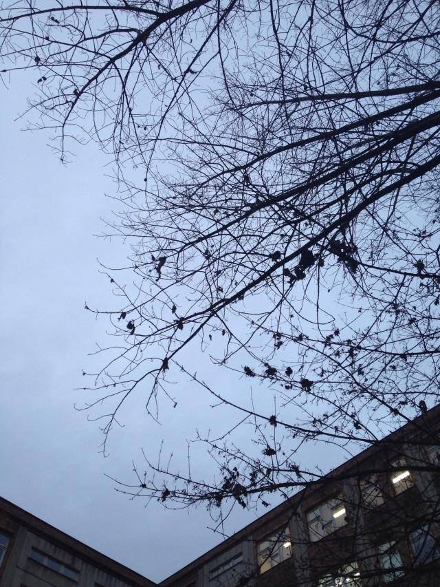 12 von 12, 12v12, Berlinskies, Berliner Winterhimmel, Winter, Grau