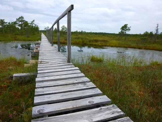 Sommerliebe, Estland, Moor, Reisemeisterei