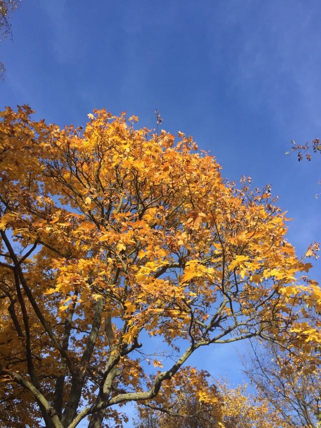 Wochenende in Bildern, Herbst, Berlinskies, Berlin, Himmel über Berlin