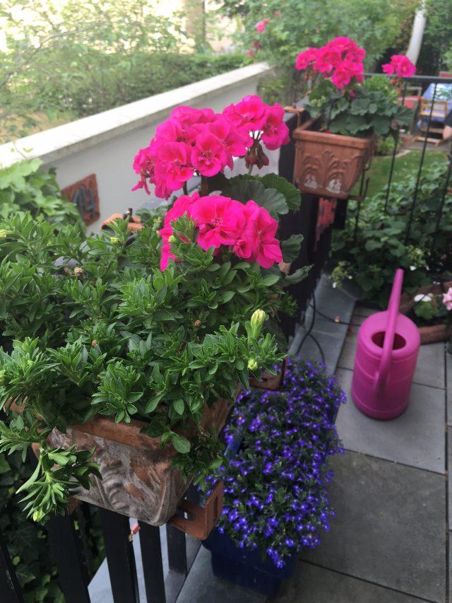 Wochenende in Bildern, Sommer, Balkon, Balkonpflanzen, Balkonkästen