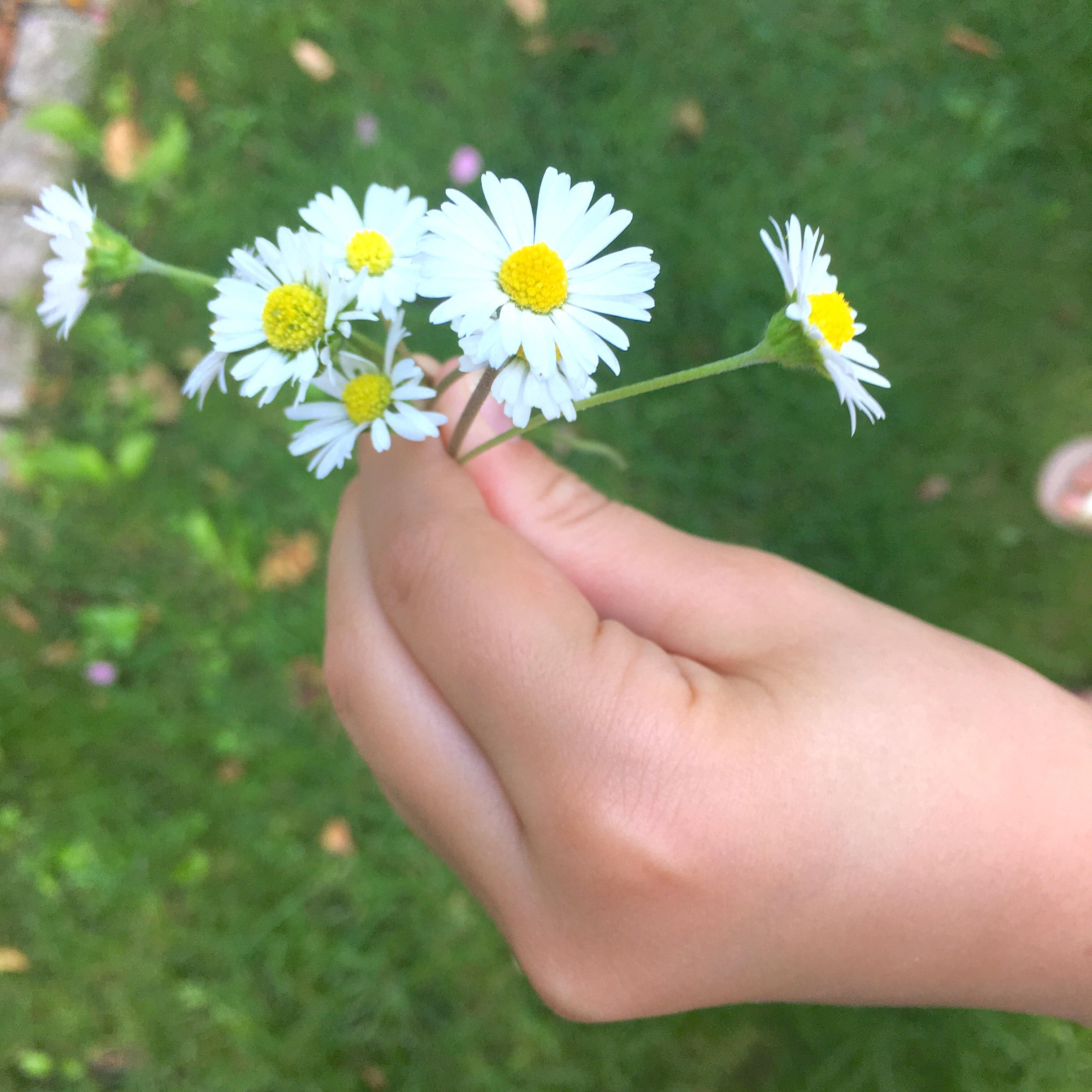 Gänseblümchen pflücken, Leben mit Kindern, Dankbarkeit, Menschsein, Helfen, Obdachlose, die Welt retten, make the world a better place,
