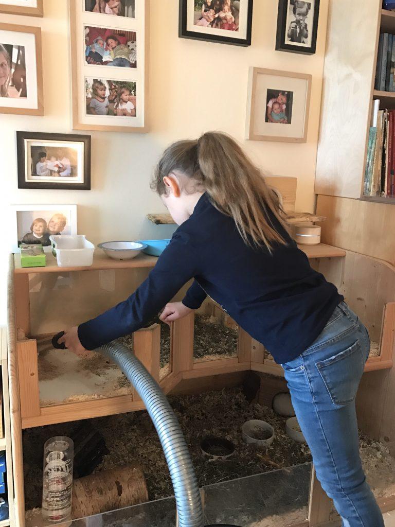Meerschweinchen sauber machen | Berlinmittmom.com