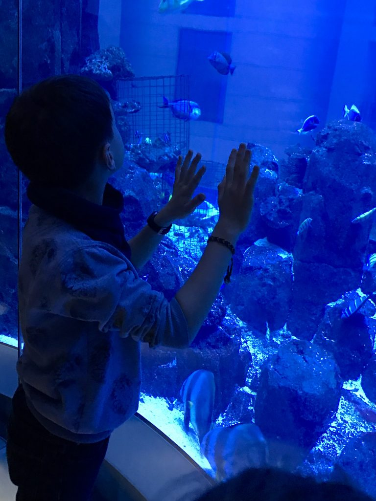 Sealife in Berlin | Berlinmittemom.com