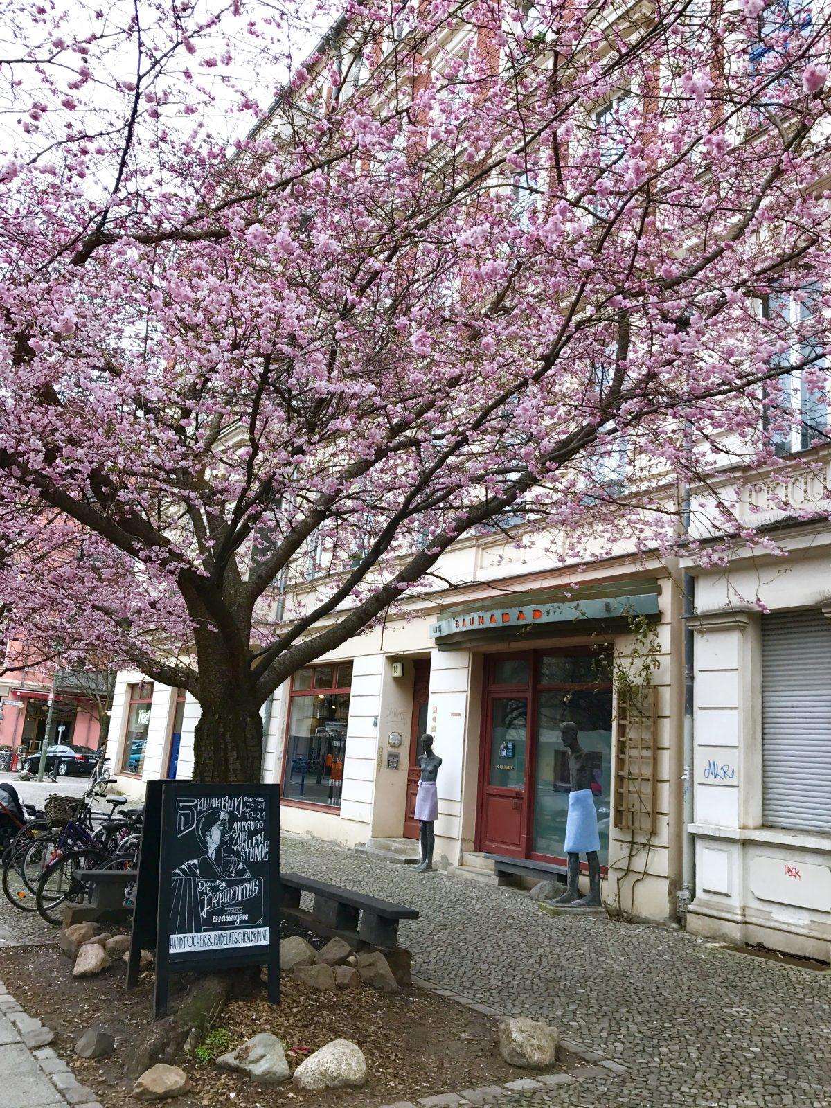 Kirschblüte im Prenzlauer Berg   Berlinmittemom.com