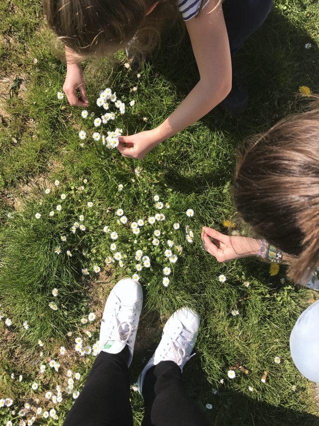 Wochenende in Bildern: Gänseblümchen