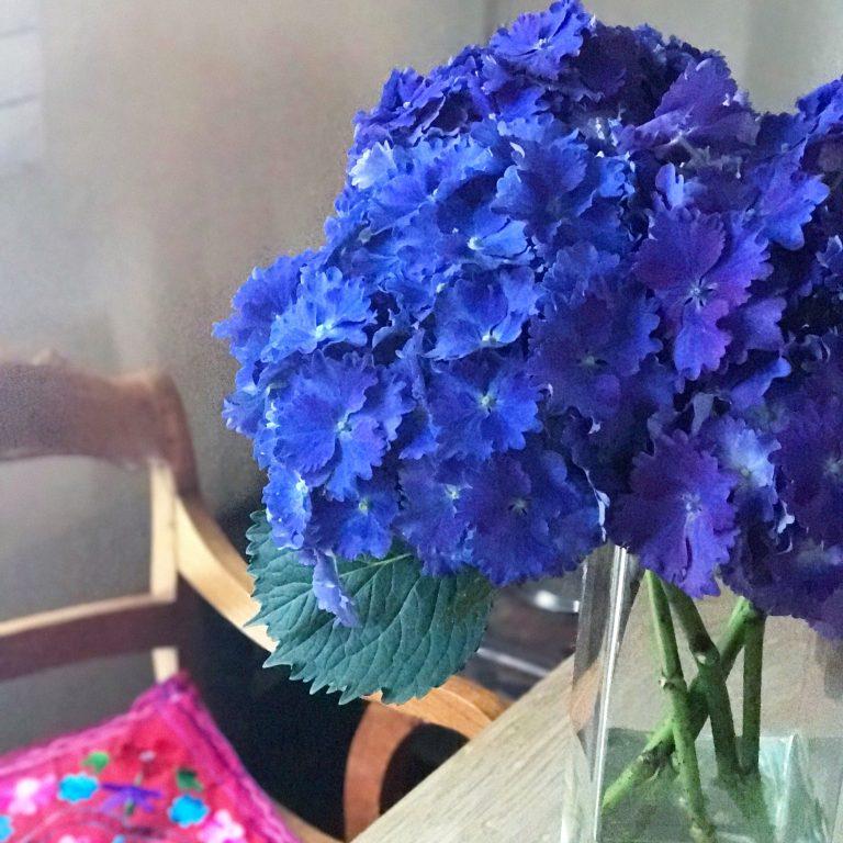 Blaue Hortensie | Berlinmittemom.com