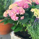 Freitagslieblinge: Hortensien und Lavendel | Berlinmittemom.com