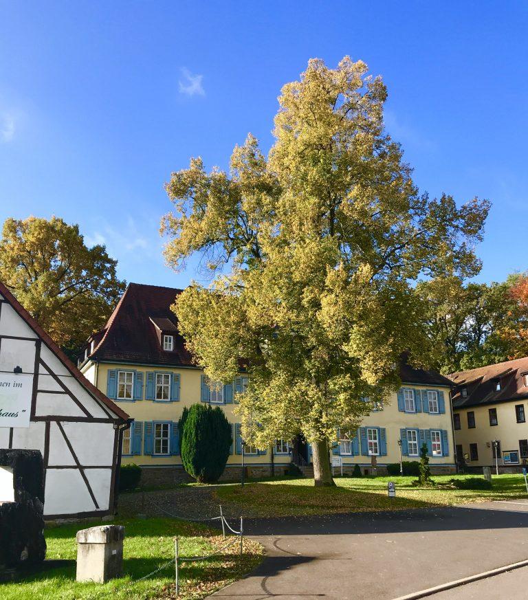 Hotel zum Herrenhaus im Nationalpark Hainich | berlinmittemom.com
