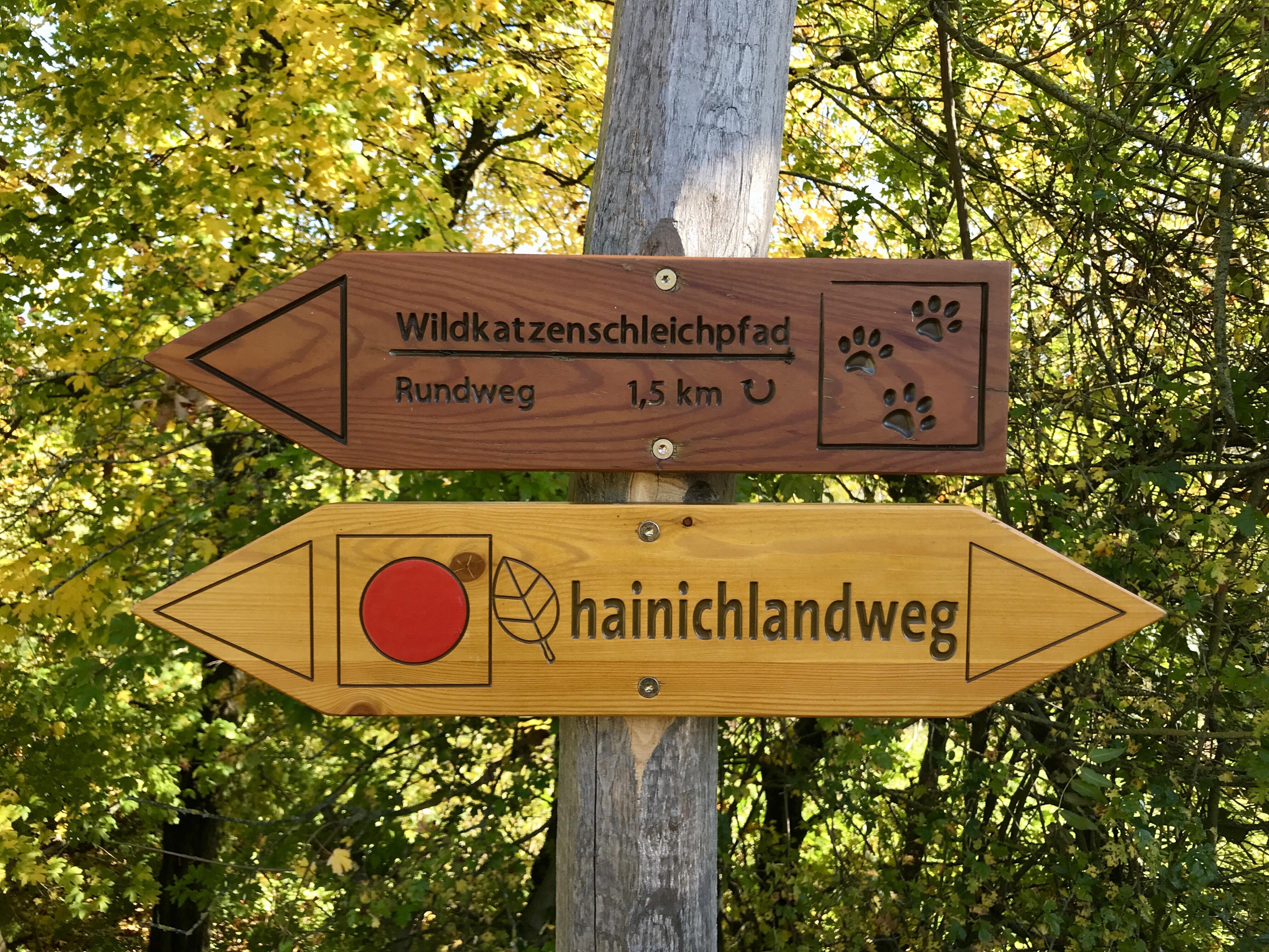 Nationalpark Hainich | berlinmittemom.com
