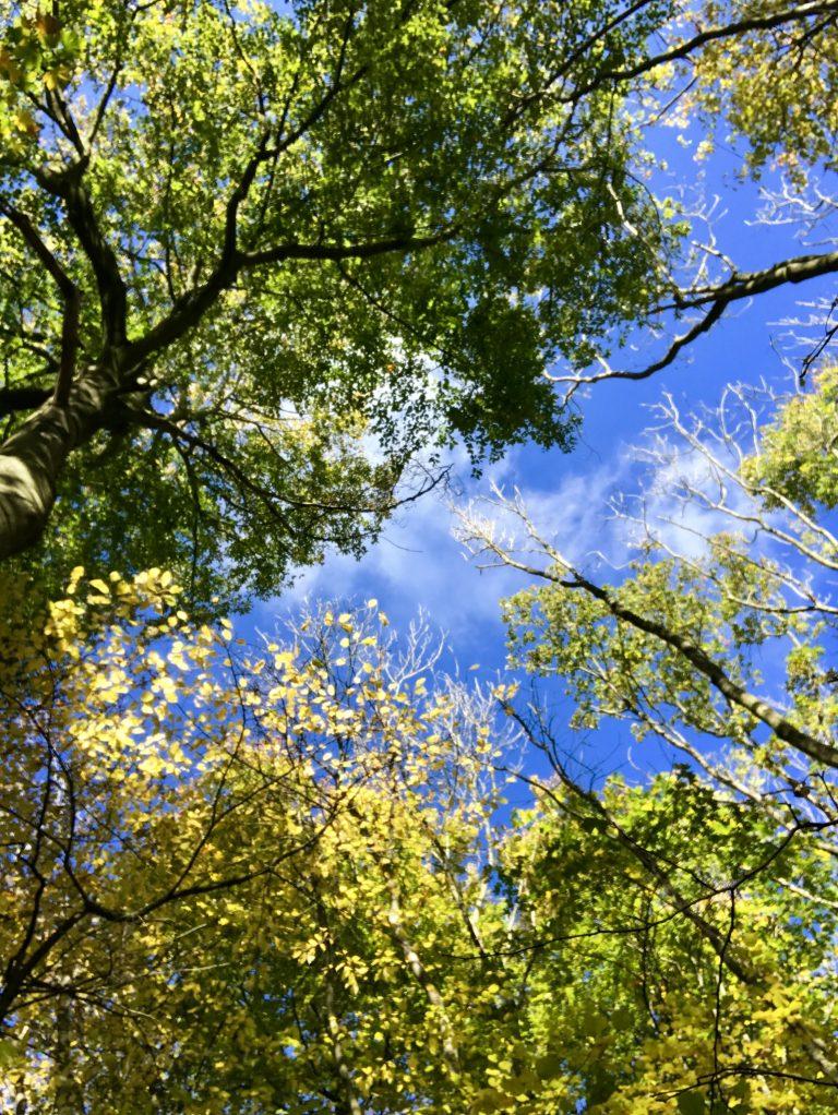 Nationalpark Hainich   berlinmittemom.com