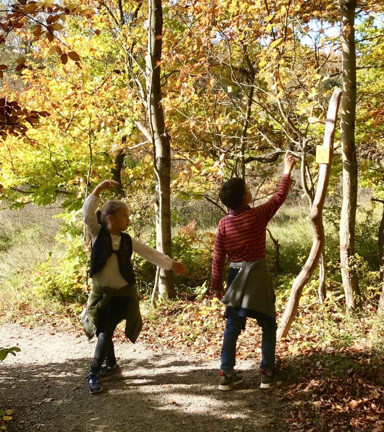 Wildkatzenschleichpfad im Nationalpark Hainich | berlinmittemom.com