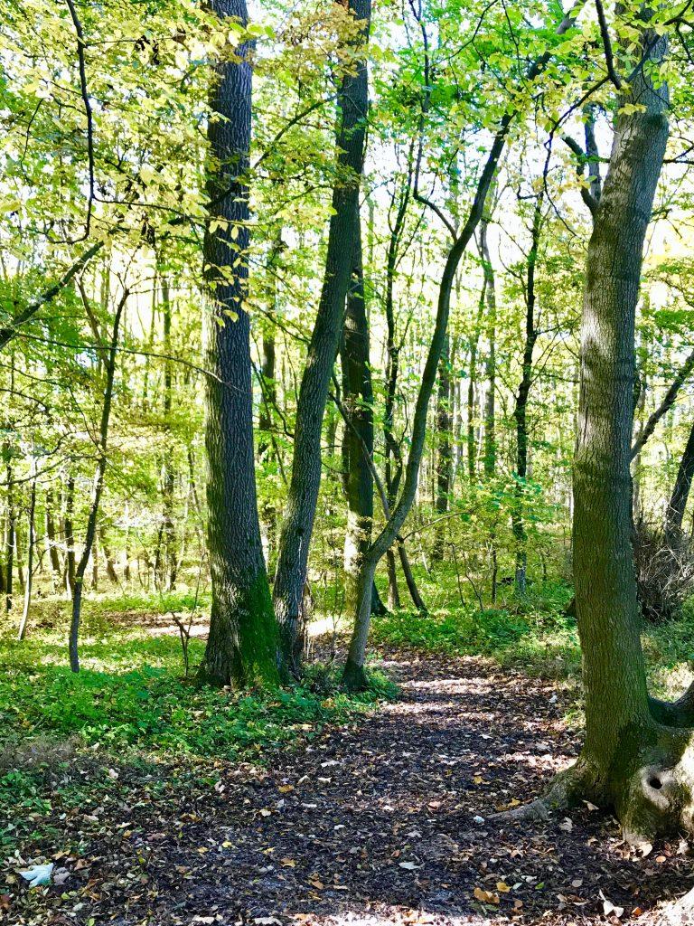 Buchenmischwald im Nationalpark Hainich