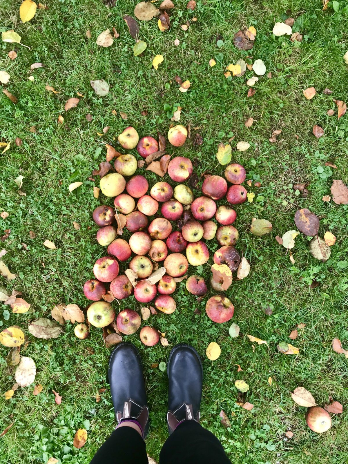 Apfelernte, Eifel | berlinmittemom.com
