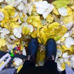 Trostbücher, Curry & Poesie | 5 Freitagslieblinge am 17. Nov 2017