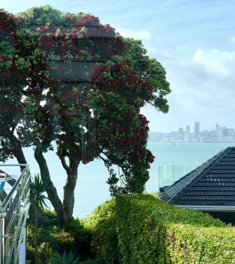 Pohutukawa Tree and Auckland Skyline | berlinmittemom.com