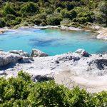 Roadtrip Neuseeland: Geysire, Riesenfarne & ein Haka | Rotorua  mit Kindern