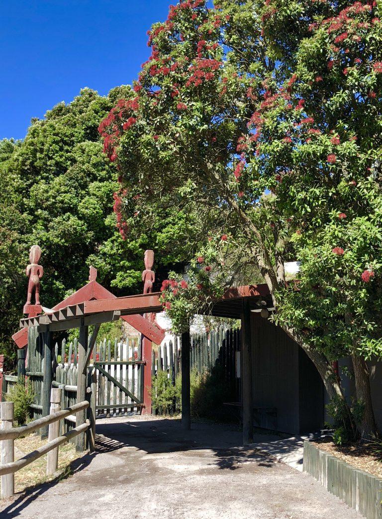 Pohutukawa Tree in Te Puia, Rotorua | berlinmittemom.com