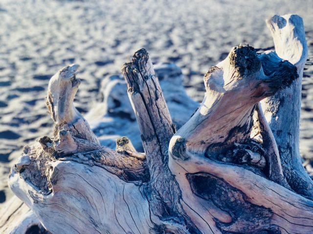 Treibholz am Fitzroy Beach, NZ | berlinmittemom.com