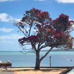 Vom Wiedersehen und der großen Ruhe | Depesche aus Neuseeland 2