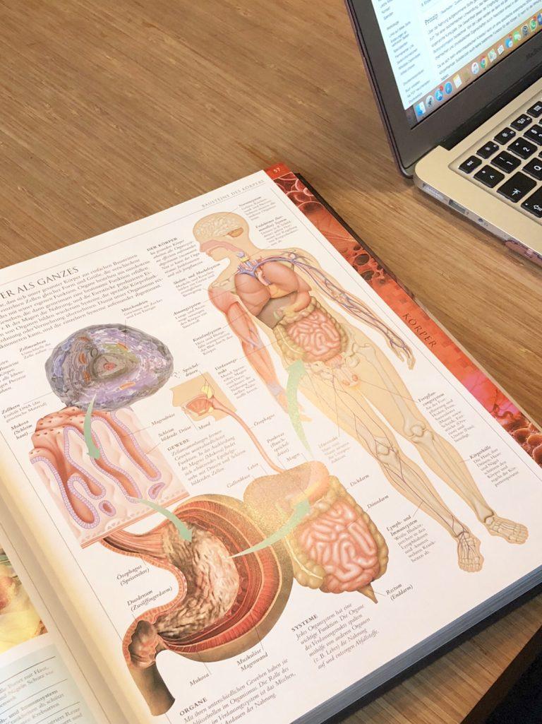 Schulprojekt Human Body | berlinmittemom.com
