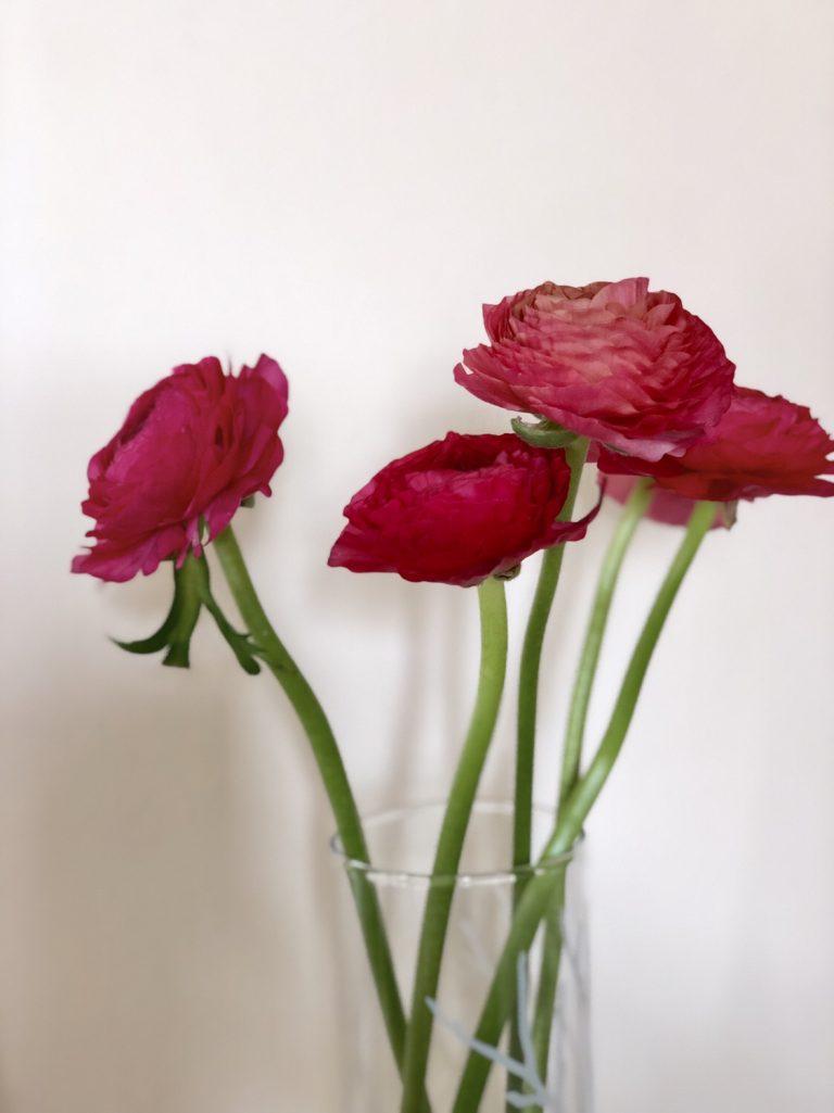 Ranunkeln: Frühling in der Vase | berlinmittemom.com
