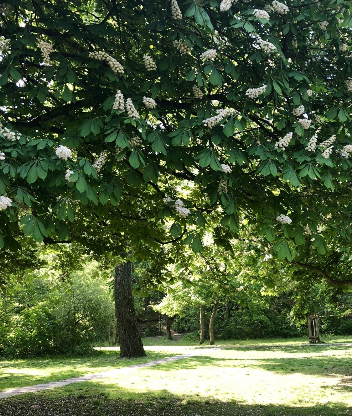 Kastanienblüte, Volkspark Friedrichshain | berlinmittemom.com