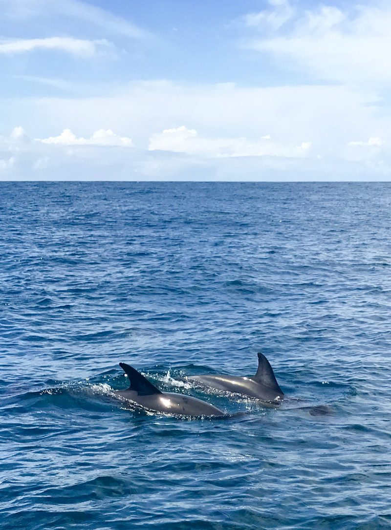 Dolphin watching Sagres | berlinmittemom.com