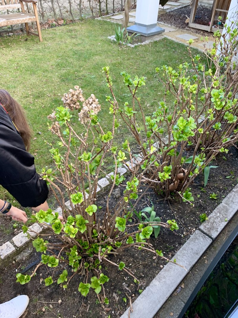 Gartenarbeit | berlinmittemom.com