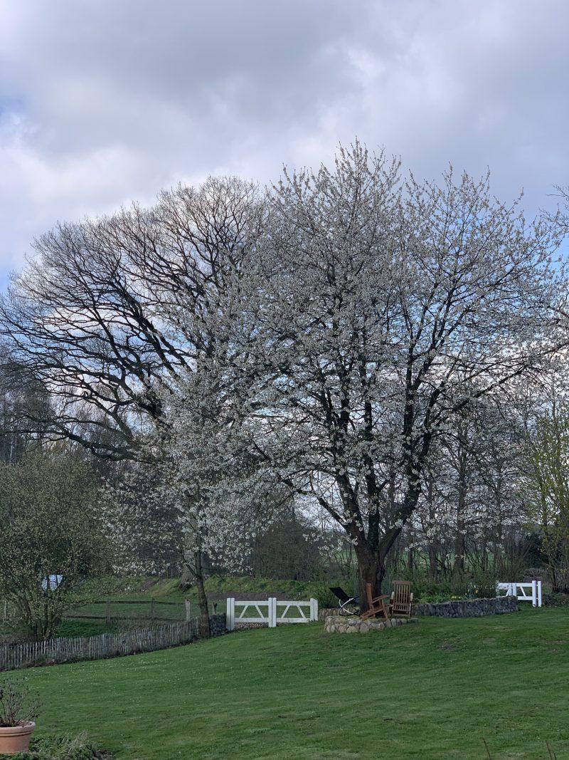 Frühlingsgarten in Klein Rönnau | berlinmittemom.com