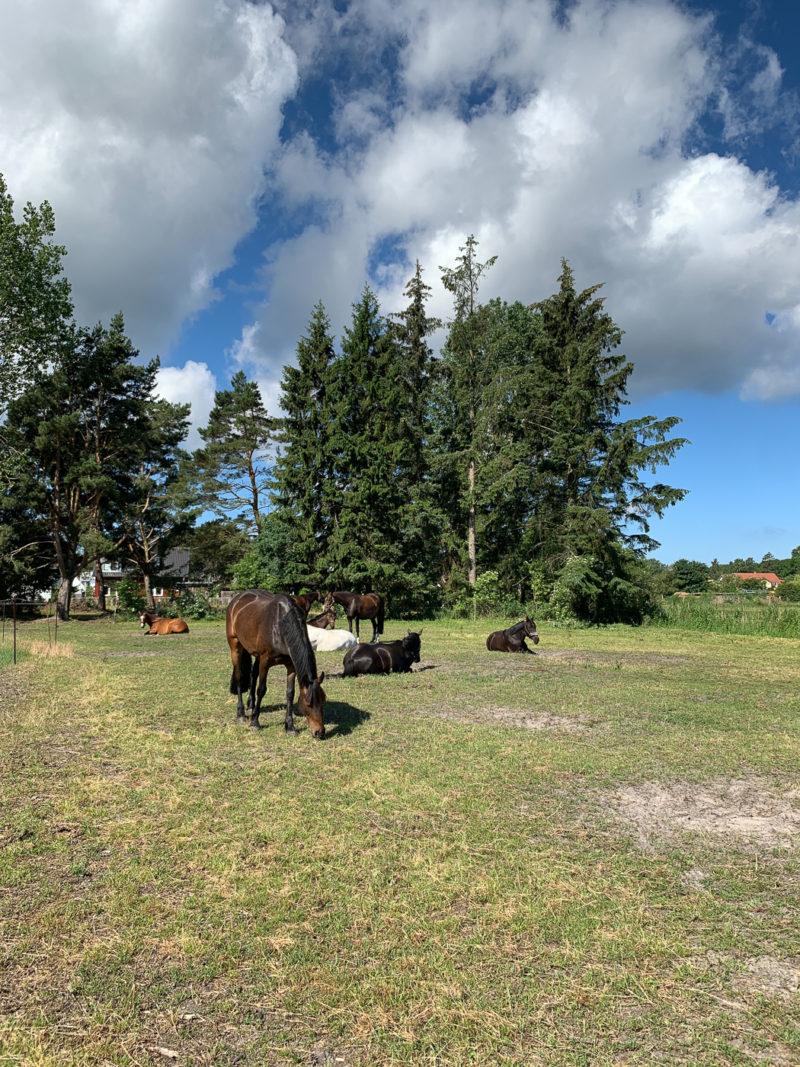 Pferdekoppel, Prerow | berlinmittemom.com