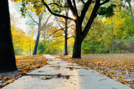 Wochenende in Bildern: Herbstfarben im Park