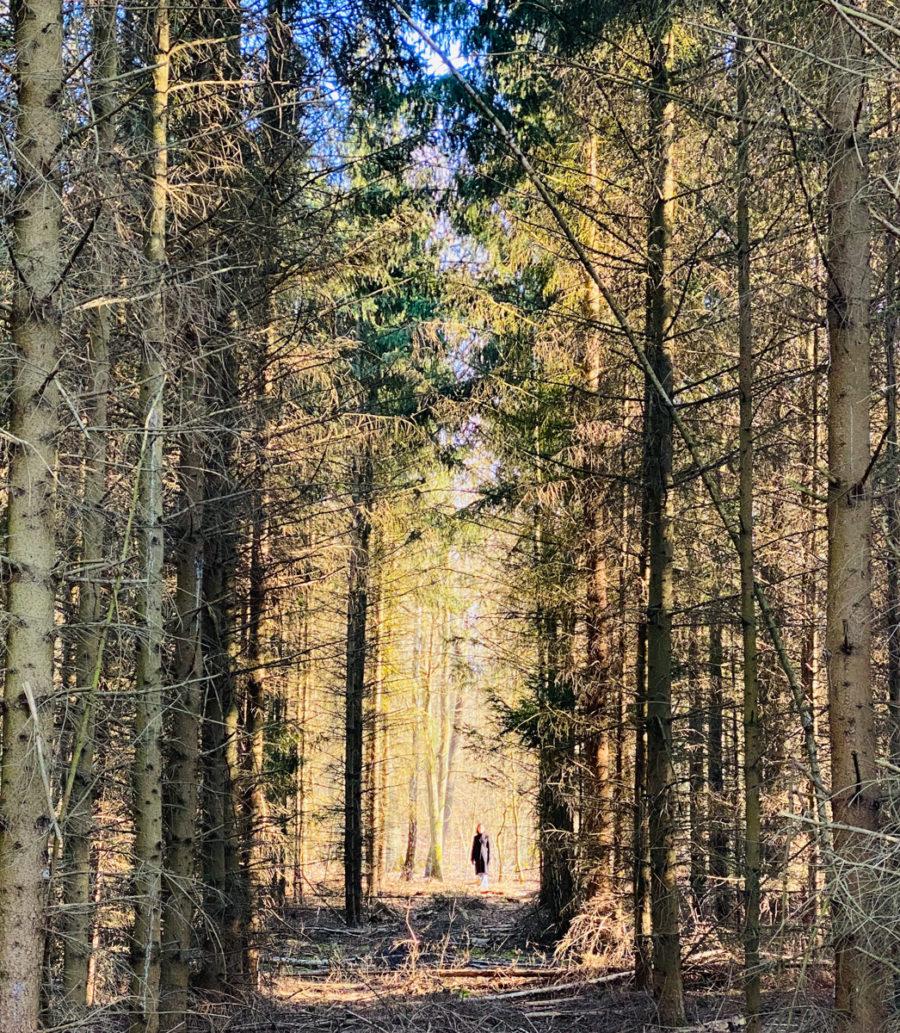 Waldeinsamkeit inn Zeiten von Corona | berlinmittemom.com