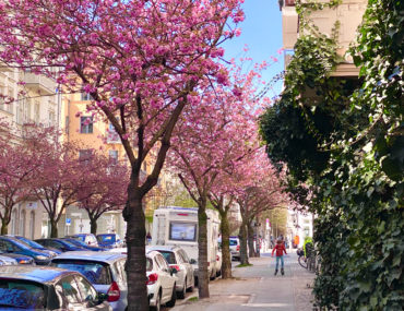 Corona Alltagscheck: Kirschblüte | berlinmittemom.com
