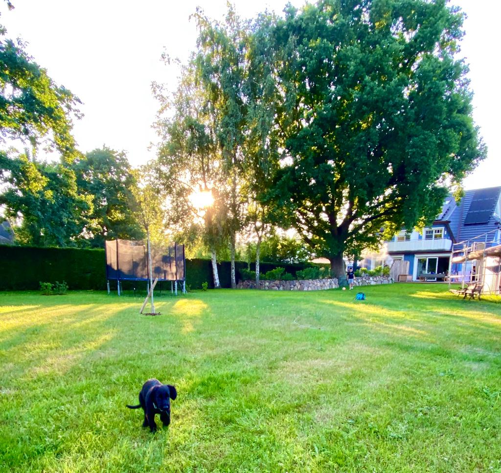 Morgen im Garten | berlinmittemom.com